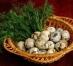 Oua de prepelita , Proaspete si sanatoase
